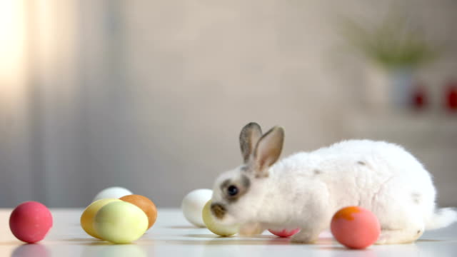 pelzigen osterhase mit gefärbten eiern auf tisch, religiöse weihnachtskarte, haustier - osterhase stock-videos und b-roll-filmmaterial