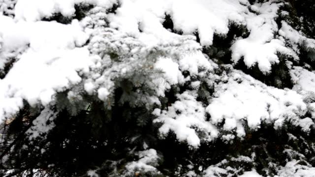 pelliccia-albero nella neve - yeti video stock e b–roll