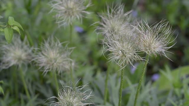 ファジーは春に色あせた夢草 - ふわふわ点の映像素材/bロール