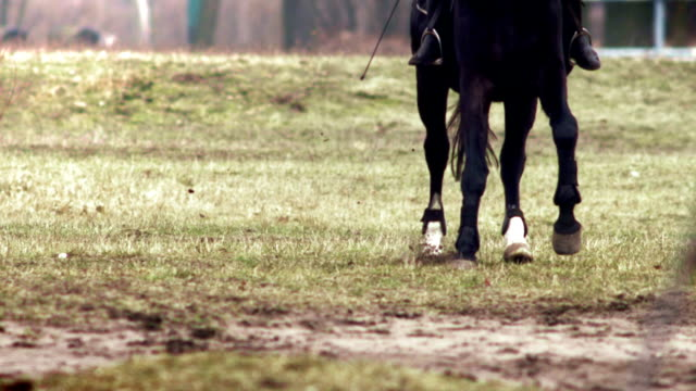 Gallop on horseback Gallop on horseback across a meadow. Slow Motion escaping stock videos & royalty-free footage