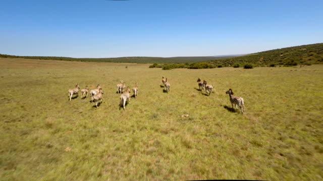 Galloping along the grasslands video