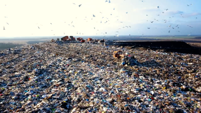Garbage Dump. Hungry Gulls are Looking for Food among the Waste