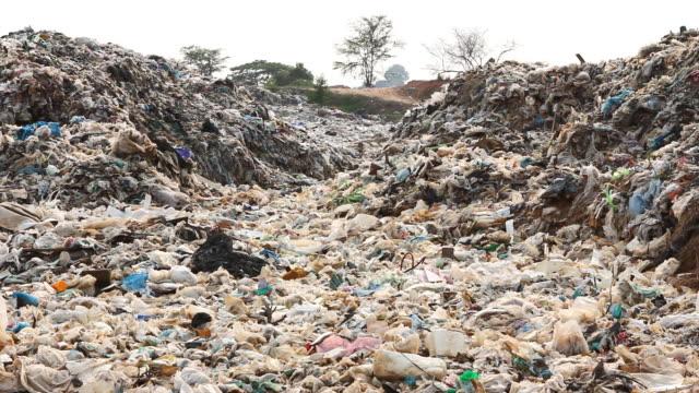 garbage dump site - food waste bildbanksvideor och videomaterial från bakom kulisserna