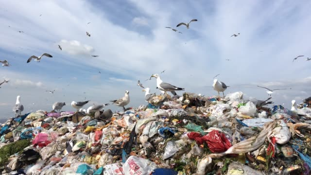 Garbage Heap of a Metropolis Seagulls flying on city dump seagull stock videos & royalty-free footage