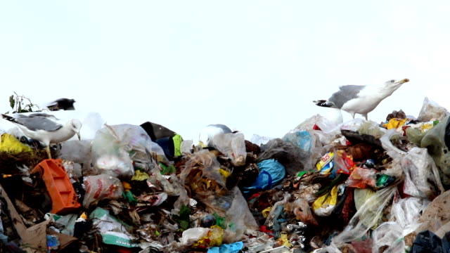 Garbage on cloudy day Seagulls on landfill on a cloudy day. seagull stock videos & royalty-free footage