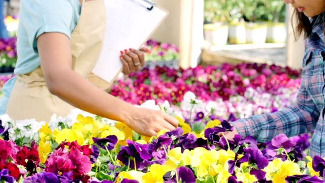 Garden center employee helps female customer with flower selection Helpful African American female garden center employee assists a mid adult woman with flower selection. They are looking at pansies in a variety of colors. The employee touches the flowers while talking with the customer. Focus is on the women's hands touching the flowers. The camera then zooms out and tilts to reveal the women talking. plant nursery stock videos & royalty-free footage