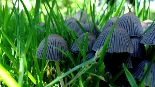 Garden Fungi