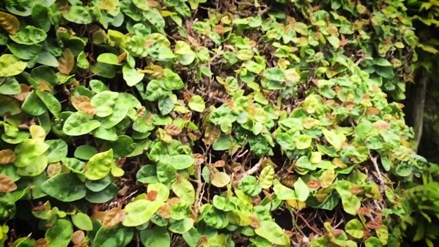 Garden Hedge in Villa del Balbianello