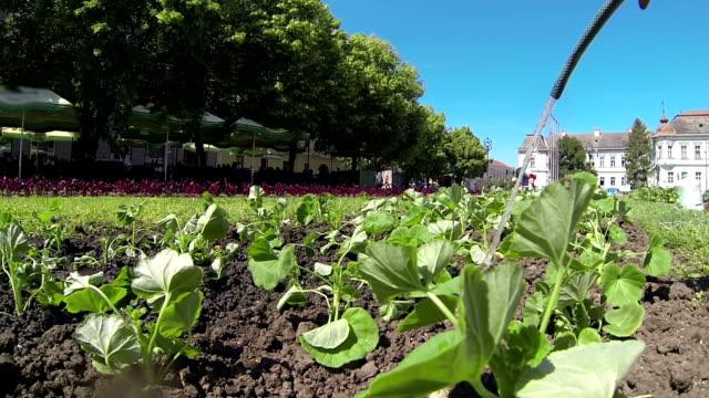 garten in der stadt - urban gardening stock-videos und b-roll-filmmaterial