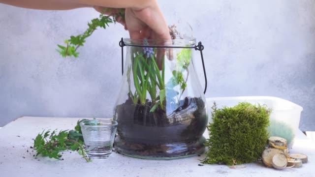 vídeos de stock e filmes b-roll de garden inside mason jar - bricolage