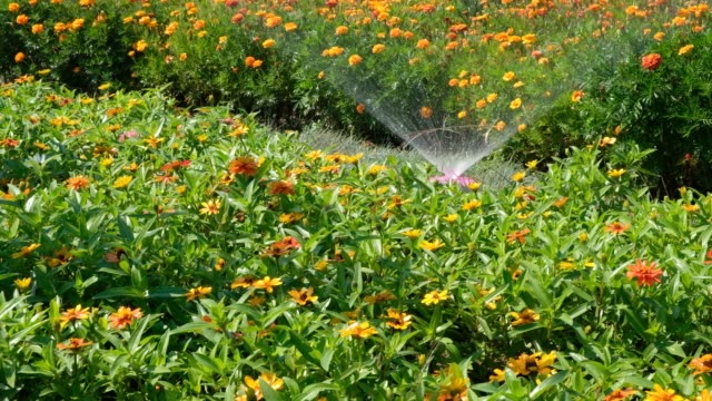 garden sprinkler sprays a flower bed