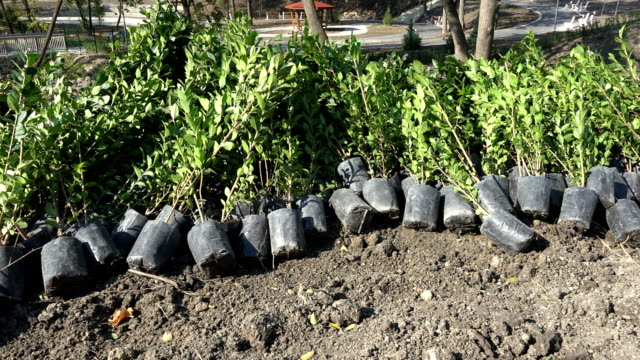 garden trees and plants seedlings ready to be planted - semenzaio video stock e b–roll