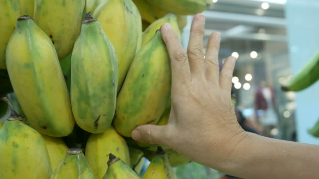 gardener checking quality of fresh banana video