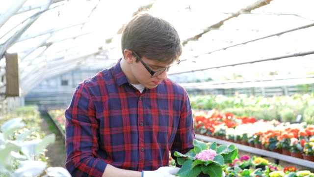 Gardener checking seedling in gardenhouse FullHD video