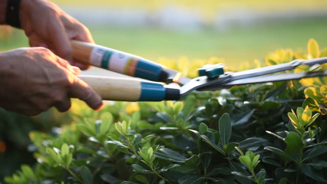 A gardener clips grass with shears video
