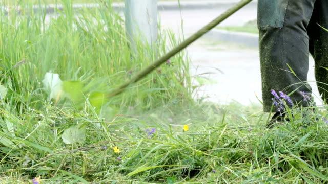 Gardener cuts a grass using a lawnmower outdoors video