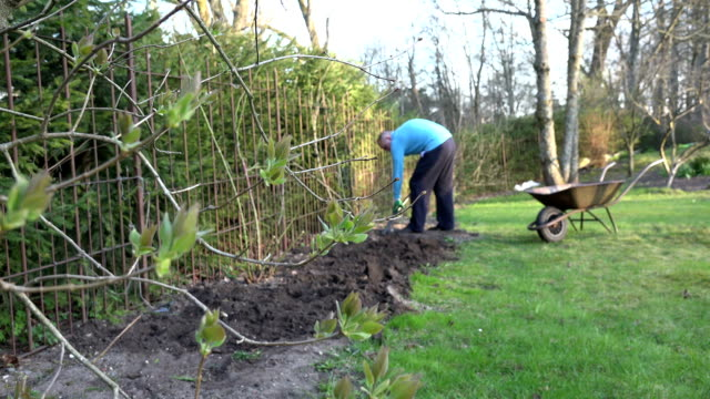 gardener dig soil with shovel along the garden fence video