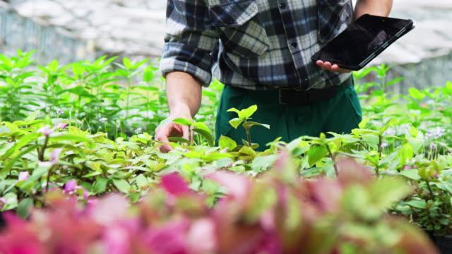 vídeos de stock e filmes b-roll de gardener examining plants in greenhouse - estufa estrutura feita pelo homem