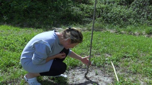 Jardinier en examinant le malade pêcher sec - Vidéo