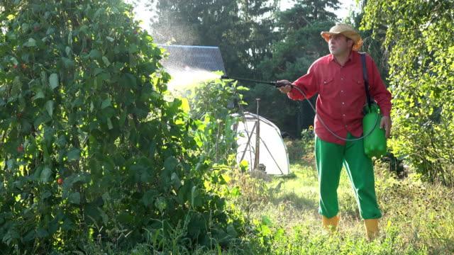 vidéos et rushes de jardinier de pulvérisation de type pesticide sur les haricots légumineuses plantes végétales. 4k - herbicide