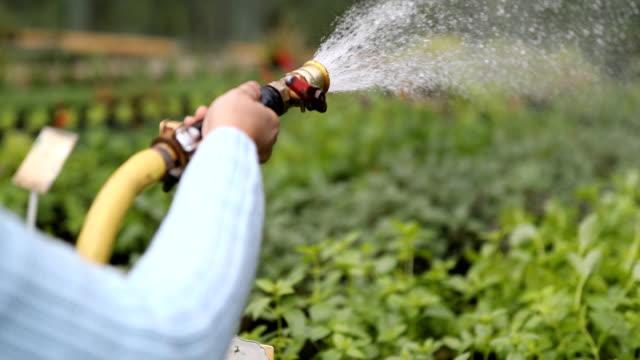 Gardener hands watering plants at garden center