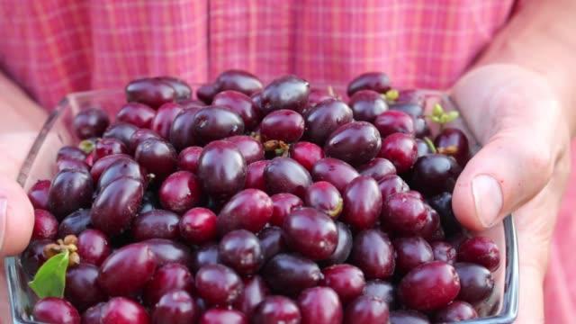 vídeos y material grabado en eventos de stock de jardinero con frutas maduras cornel europeo en sus manos - cáliz objeto religioso