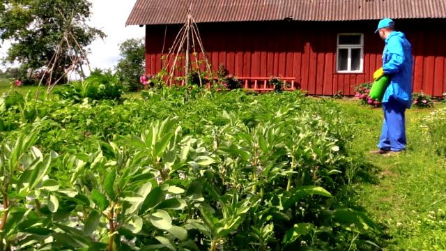vidéos et rushes de jardinier homme spray de l'engrais chimique pommes de terre et de haricots de plantes - herbicide