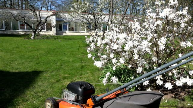 Gardener mow lawn. Spring blooms in garden video