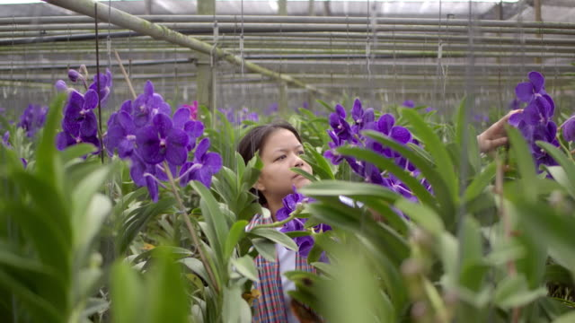 Gardener orchid Asian woman are taking care of flowers vanda orchid plant farm small business