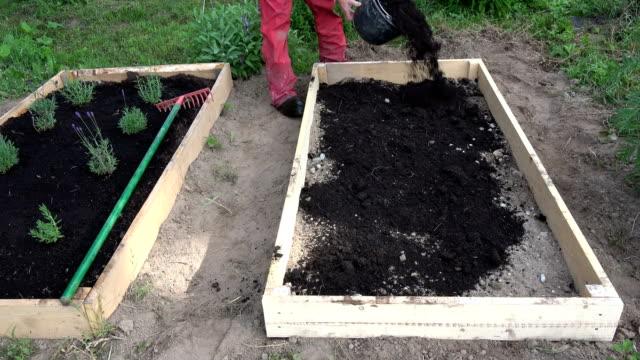 新しい木製の上げベッドに黒い土の腐いを注ぐ庭師 - 花壇点の映像素材/bロール