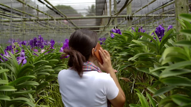 Gardener purple vanda orchid Asian woman are  talking and selling flowers to a customer on the phone, rear view shot