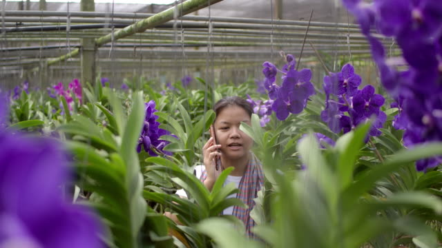 Gardener purple vanda orchid Asian woman are  talking and selling flowers to a customer on the phone, front view shot