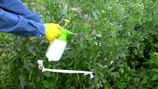 gardener spraying bean  with chemicals  in farm video