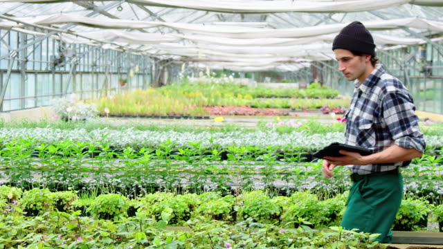 Gardener supervise seedlings in garden center