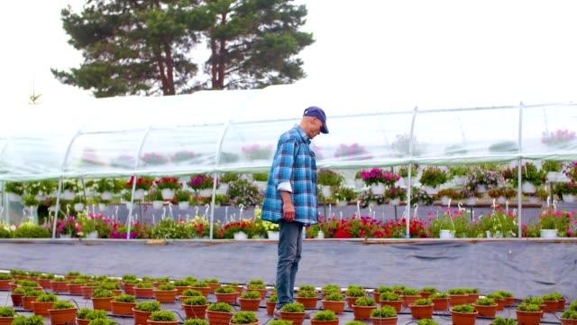 trädgårdsmästare övervaka växter i växthus - endast en medelålders man bildbanksvideor och videomaterial från bakom kulisserna