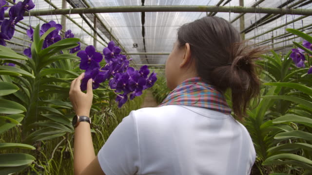 Gardener vanda orchid Asian woman are  talking and selling flowers to a customer on the phone, rear view shot.