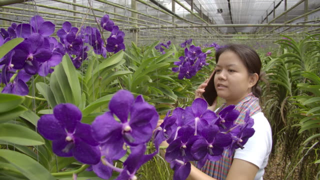 Gardener vanda orchid Asian woman are  talking and selling flowers to a customer on the phone, side view shot.