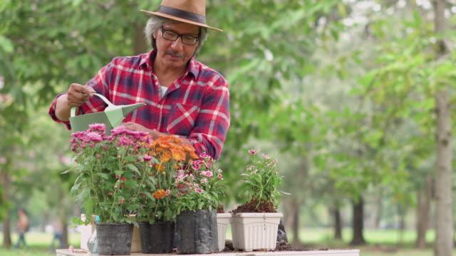 gardener watering flower in a potting - gardening video stock e b–roll