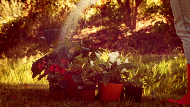 Gardener watering flower with watering can