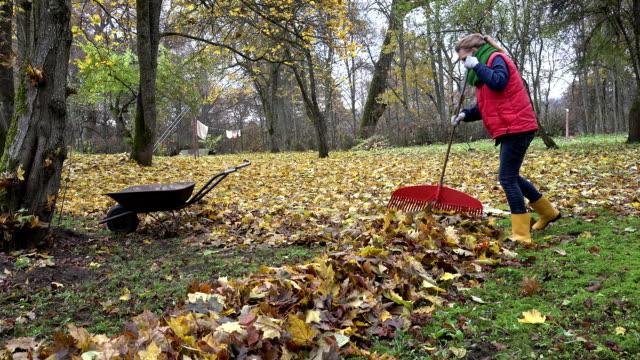 Gardener woman raking leaves in backyard. Empty rusty barrow cart. FullHD video