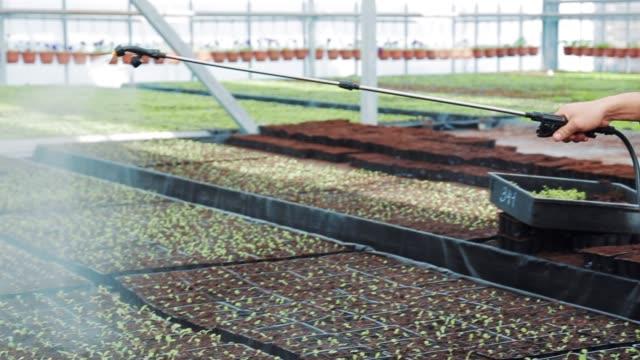 vidéos et rushes de ouvrier jardinier, arrosage des plantes semis dans une serre hydroponique moderne - botanique