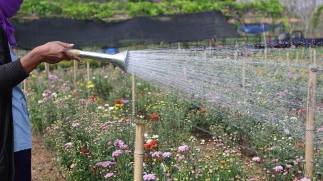Gardeners are watering flowers. Gardeners are watering flowers. plant nursery stock videos & royalty-free footage
