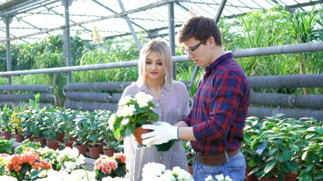 Gardeners checking flowerpots in gardenhouse FullHD video