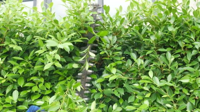 vidéos et rushes de arbre de coupe de main de jardinier avec trimme - haie