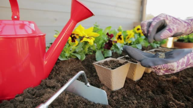 Gardeners hands planting flowers in pot with dirt or soil. Gardening concept Gardeners hands planting flowers in pot with dirt or soil. Gardening concept flower pot stock videos & royalty-free footage