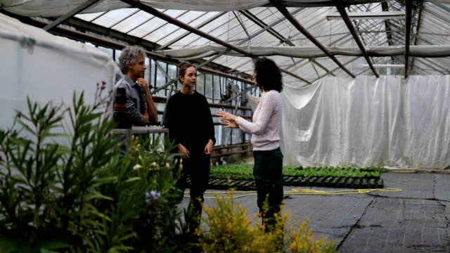 Gardeners having a discussion in garden center Group of three people talking in a greenhouse. Male and female gardeners having a discussion in garden center. human relationship stock videos & royalty-free footage