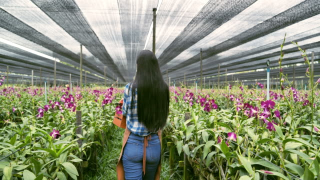 Gardeners orchid asian woman are select the best orchids for export sales to customers.