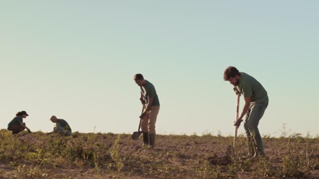 gardeners team working in field - four seasons filmów i materiałów b-roll