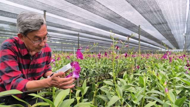 Gardeners use tablets to check the amount of flowers order, he sells the goods through e-commerce business.