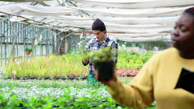 Gardeners working in a greenhouse plantation